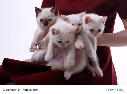 many white kittens in the hands of women
